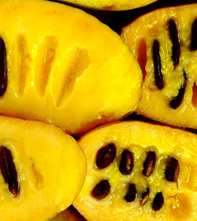 Pawpaw-fruit